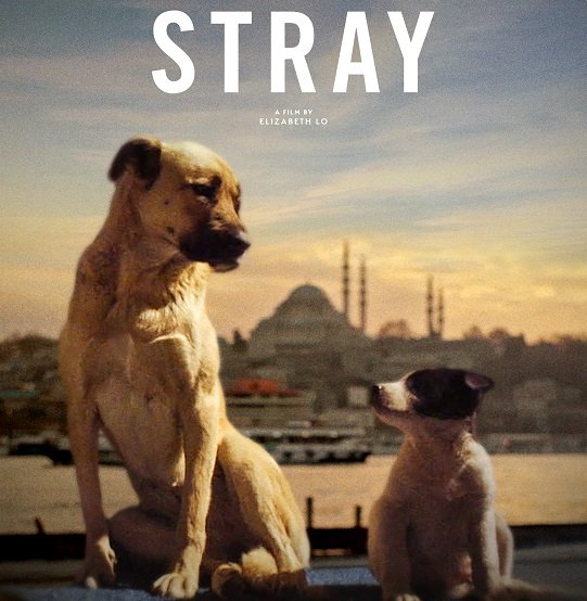 VIRTUAL CINEMA: Stray